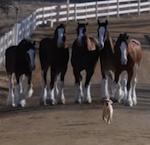 Budweiser Puppy Love Super Bowl ad